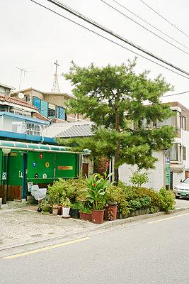 Urbanes Gärtchen an einer Straße in Seoul, Südkorea - p066m2015491 von Studio71