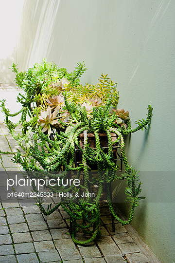 Decoration, Plants - p1640m2245833 by Holly & John