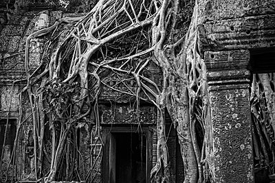 Ancient Angkor temple overrun with roots - p1445m1586179 by Eugenia Kyriakopoulou