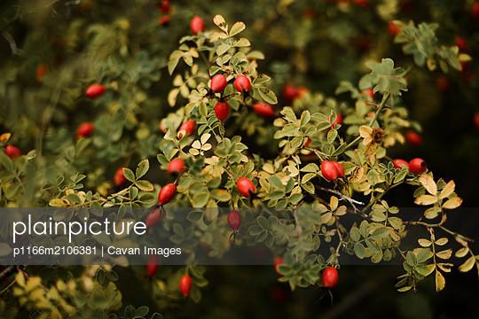 p1166m2106381 von Cavan Images