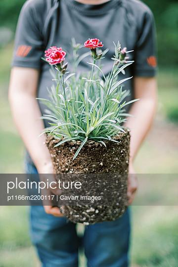 Close up of a little boy holding a plant - p1166m2200117 by Cavan Images