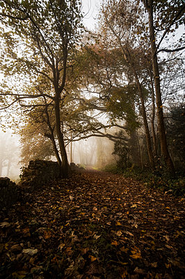 Avenue of trees by path covered in fallen leaves next to old stone wall - p1047m1510726 by Sally Mundy