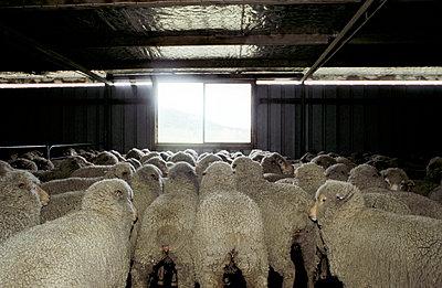 Livestock stable - p1330217 by Martin Sigmund