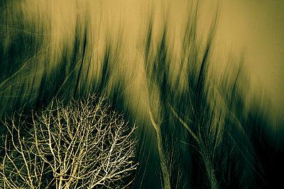 Baum in der Nacht - p979m909937 von Kosa