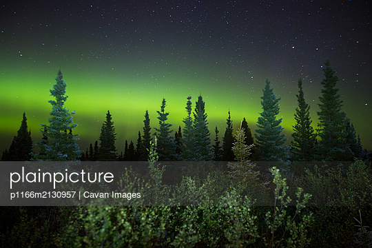 Aurora borealis and starry night sky over trees and forest, Labrador - p1166m2130957 by Cavan Images