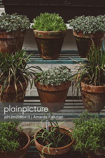 Potted plants on shelves - p312m2086415 by Amanda Falkman
