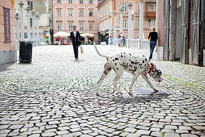 Hund in Ljublana - p3227177 von Simo Vunneli