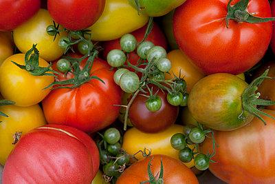 Bunte Tomaten - p454m739771 von Lubitz + Dorner