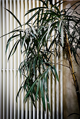 Houseplant - p1149m1193361 by Yvonne Röder
