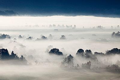 View of tree in fog - p300m659966f by Martin Siepmann