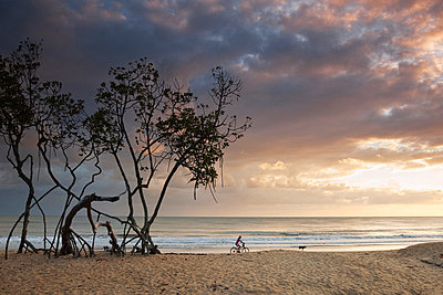 Australia, Queensland, Cairns. Mangrove trees on Kewarra beach at dawn. - p652m716705 by Andrew Watson