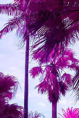 Infrared landscape with red palm trees - p1487m2150172 by Ludovic Mornand