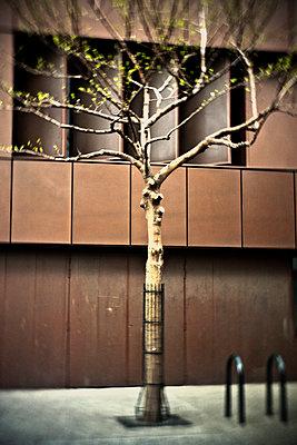 Stadtbaum - p1118m1196055 von Tarik Yaici