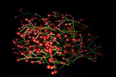 Rote Beeren, LED - p1338m1181721 von Birgit Kaulfuss
