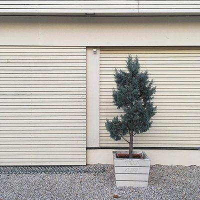 Einzelner Nadelbaum vor Fassade mit Jalousien - p1401m2269893 von Jens Goldbeck