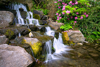 Rhododendrons beside waterfall, Crystal Springs Garden, Oregon, USA - p4426915f by Design Pics