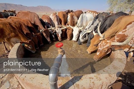 Rinder beim Trinken an einem Brunnen in Orupembe, Kaokoveld, Namibia - p1316m1161111 von Jörg Reuther