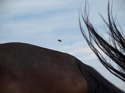 Mosquito - p444m924651 by Müggenburg