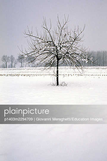Trees - p1403m2294709 by Giovanni Mereghetti/Education Images