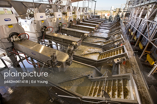 Agriculture - Pistachio processing facility; the freshly harvested nuts are washed (right) and then transported to the dryers (left) / near Delano, San Joaquin Valley, California, USA. - p442m961418 by Ed Young