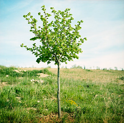 Small tree - p1468m1528620 by Philippe Leroux