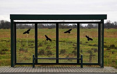 Bus stop - p3790228 by Scheller