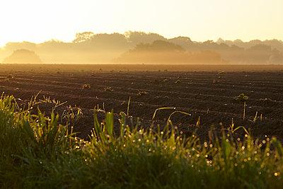 Kartoffelacker morgens - p897m1083227 von MICK