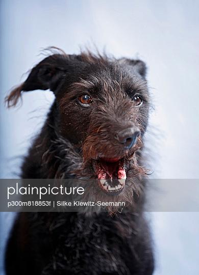 Mixed breed dog - p300m818853f by Silke Klewitz-Seemann
