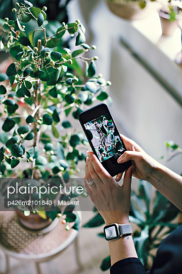 Cropped hands of woman photographing potted plant at home - p426m2101843 by Maskot