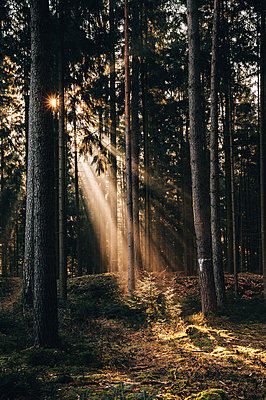 Trees in the sunlight - p1326m2272976 by kemai