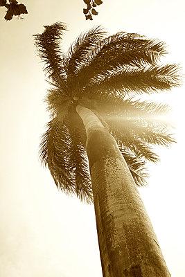 Palme im Wind - p606m885567 von Iris Friedrich