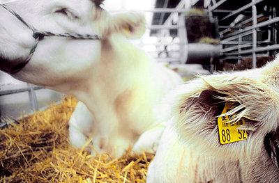 Dairy Farm - p2530259 by Oscar