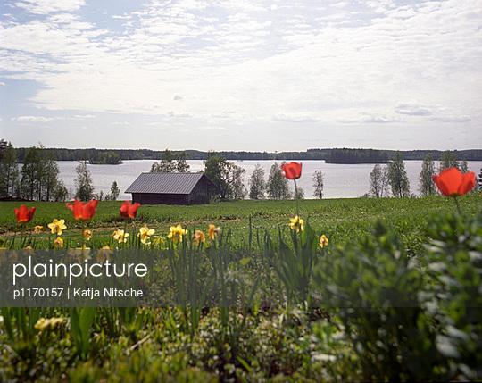 Landscape in Finland - p1170157 by Katja Nitsche