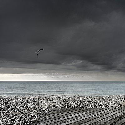Seagull - p1137m940640 by Yann Grancher