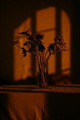 Silhouette eines Blumenstraußes - p1270m1106536 von Christophe Deschanel