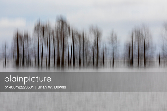 Vertical motion blur of a cypress trees - p1480m2229501 by Brian W. Downs