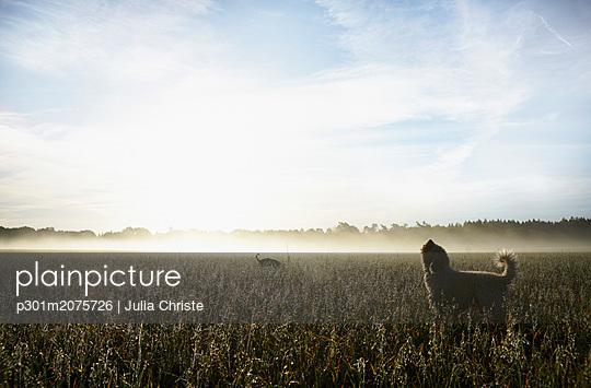 p301m2075726 von Julia Christe