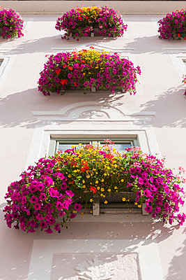 Germany, Bavaria, Decorated window with flowers - p300m2207154 by Martin Moxter