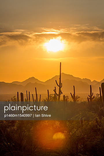 Saguaro National Park, Arizona - p1460m1540997 by Ian Shive