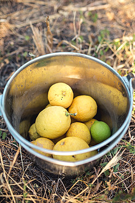 Lemons and lime in bucket - p1059m1502054 by Philipp Reiss