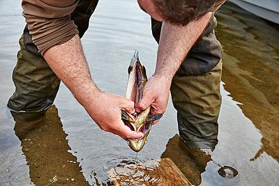 Fisch ausnehmen - p1272m1460813 von Steffen Scheyhing