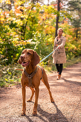 Vorstehhund an der Leine - p1352m1425339 von Kilian Reil