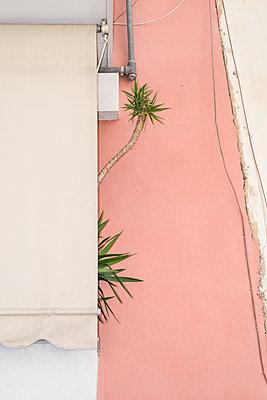Palm trees - p1505m2043621 by Jakob Weber