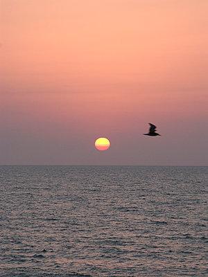 Sunset - p1499m2013468 by Marion Barat