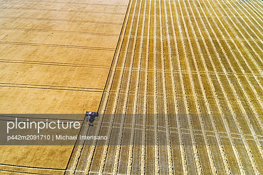 Aerial view of a swather cutting a golden barley field with harvest lines; Beiseker, Alberta, Canada - p442m2091710 by Michael Interisano