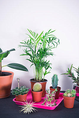 House plants - p1149m1553249 by Yvonne Röder