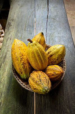 Costa Rica, La Virgen de Sarapiqui, Picked Cocoa Pods Used For Demonstration On How To Make Chocolate, Tirimbina Biological Reserve - p651m860513 by John Coletti photography