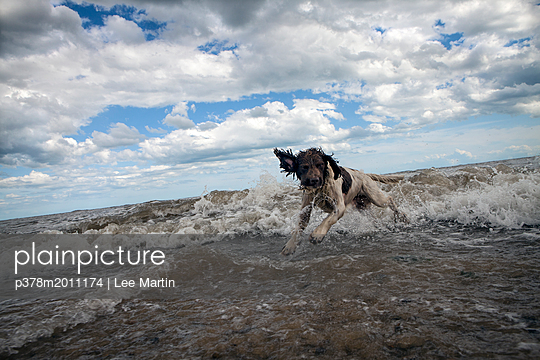 p378m2011174 von Lee Martin