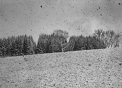 Winterlandschaft - p1649m2231760 von jankonitzki