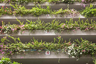 Planted balconies - p631m913081 by Franck Beloncle